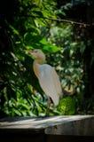 Grote witte vogel Royalty-vrije Stock Fotografie