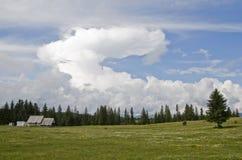 Grote wolk op de weide stock afbeelding