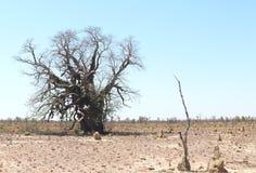 Grote zandige woestijn. Royalty-vrije Stock Afbeeldingen