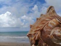 Grote zeeschelp op het zand door het overzees stock foto's