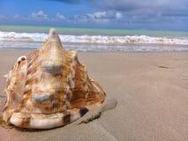 Grote zeeschelp op het zand door het overzees royalty-vrije stock afbeelding
