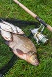 Grote zoetwater gemeenschappelijke brasem en witte brasem of zilveren brasemvissen royalty-vrije stock fotografie