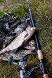 Grote zoetwater gemeenschappelijke brasemvissen en hengel met spoel op La royalty-vrije stock foto's