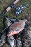 Grote zoetwater gemeenschappelijke brasemvissen en hengel met spoel op La stock afbeeldingen