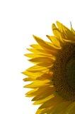 Grote zonnebloem hoofd tonende details Royalty-vrije Stock Fotografie