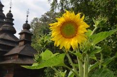 Grote zonnebloem op de achtergrond van een oud kerkgebouw Royalty-vrije Stock Afbeelding