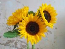 Grote zonnebloemen Royalty-vrije Stock Afbeeldingen