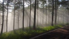 Grote zonnestralen, zonneschijn met mistige achtergrond in het bos royalty-vrije stock foto's