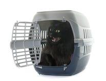Grote zwarte kat in kennel stock fotografie