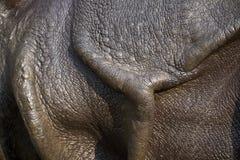 Grotere één-gehoornde rinoceros Stock Afbeeldingen
