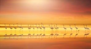 Grotere flamingo in kleurrijk meer Royalty-vrije Stock Afbeelding