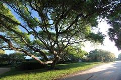 Groteskt träd Arkivfoto