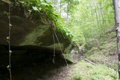 Grottaöverhäng i en tät skog Arkivfoto