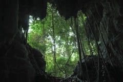 Grotta av den primära skogen Royaltyfri Foto