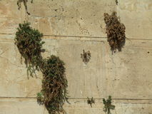 Grotta av patriarkerna i Hebron, Israel Fotografering för Bildbyråer