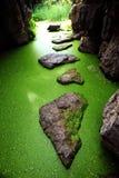 grottaduckweed Royaltyfri Bild