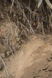 Grottan rotar guld- sand Royaltyfria Foton