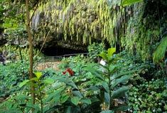 Grotte de fougère, Kauai Images libres de droits