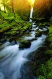 Grotte moussue un matin de ressort photographie stock libre de droits