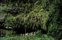 grotto папоротника стоковые фото