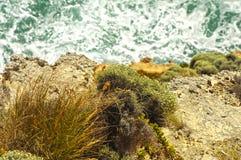 grotto imagen de archivo libre de regalías