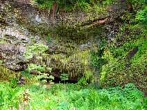 Grotto do Fern, parque de estado de Wailua, Kauai, Havaí Imagens de Stock
