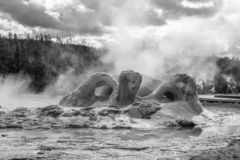 Grotto Geyser steams in Upper Geyser Basin royalty free stock photography