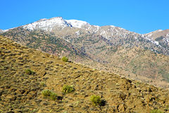 In ground africa morocco    the snow tree Royalty Free Stock Images