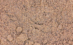 Ground Allspice Close View. A close view of ground allspice seasoning royalty free stock image