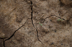 Ground,background,soil. Picture Ground for texture and background Stock Photo