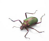 Ground beetle Stock Photos