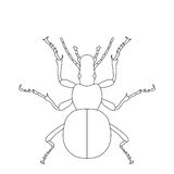 Ground beetle bug. Carabidae.. Sketch of ground beetle.  ground beetle isolated on white background. ground beetle Design for coloring book.  hand-drawn ground Stock Photos