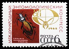 Ground Beetle (Carabus schoenherri), Emblem of 13th Entomology congress, International Congresses serie, circa 1968. MOSCOW, RUSSIA - OCTOBER 21, 2018: A stamp royalty free stock images