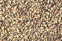 Ground black pepper Royalty Free Stock Photos