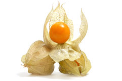 Ground cherries. A pile of ground cherries isolated on a white background Stock Photos