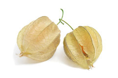 Ground cherries. Some ground cherries on a white background Stock Images