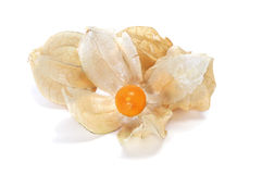 Ground cherries. Some ground cherries on a white background Royalty Free Stock Images