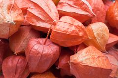Ground cherry Royalty Free Stock Photography