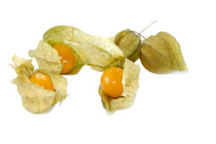 Ground-cherry Royalty Free Stock Photography