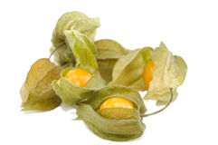 Ground-cherry Stock Photos
