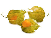 Ground-cherry Stock Images