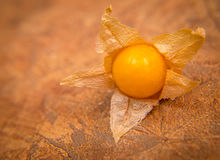 Ground cherry Stock Photos