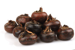 Ground chesnut, Chinese water chestnuts: fruit native of Thailand has medicinal properties. Stock Photo