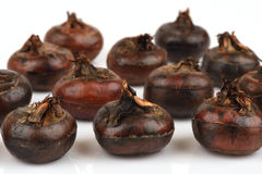 Ground chesnut, Chinese water chestnuts fruits of thailand. Ground chesnut, Chinese water chestnuts, herbs, reed family, sweet, anti-bacterial compounds puchin royalty free stock photo