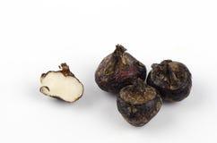 Ground chesnut (Eleocharis dulcis). Stock Images