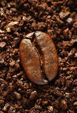 Ground coffee bean Stock Photography
