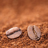 Ground coffee beans with copy space copyspace Stock Photos