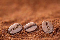 Ground coffee beans with copy space copyspace Stock Photo
