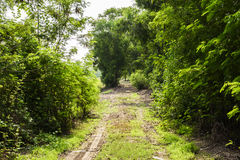 Ground corridor into the deep forest Royalty Free Stock Image