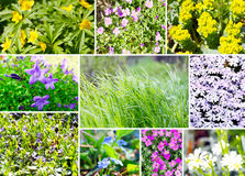 Ground cover assortment Stock Photography